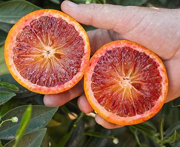 blood-orange-vcf